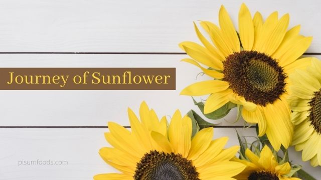 Journey of Sunflower