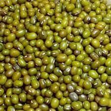 Green gram / Mung bean